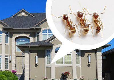Ants carlsbad pest control by mtbstrategy