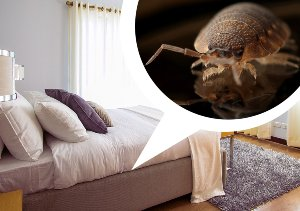 Bed Bugs Control In Carlsbad CA