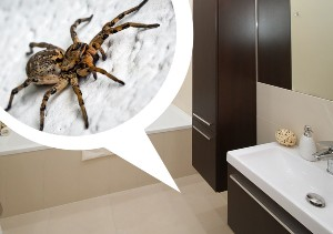 spiders carlsbad pest control by mtbstrategy